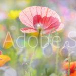 AdobeStock 101499133 Preview