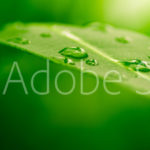 AdobeStock 10358383 Preview