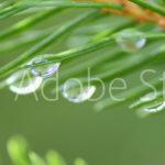 AdobeStock 104082126 Preview