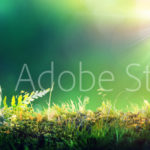 AdobeStock 106029618 Preview