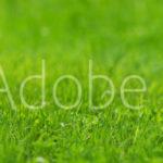 AdobeStock 115329404 Preview