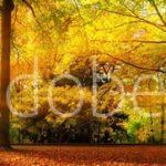 AdobeStock 119517853 Preview