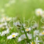 AdobeStock 132299999 Preview
