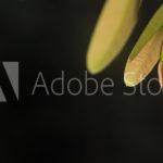 AdobeStock 172866499 Preview