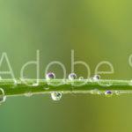 AdobeStock 76068320 Preview1