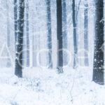 AdobeStock 76074068 Preview