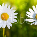 AdobeStock 80255596 Preview