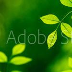 AdobeStock 83423610 Preview
