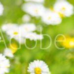 AdobeStock 84307575 Preview