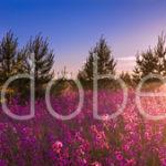 AdobeStock 85730970 Preview